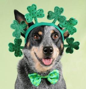 shamrock dog